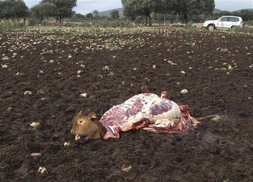 Spaniards Take to Looting Farms
