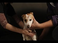 Taiwan Photographer's Crusade: Doomed Shelter Dogs
