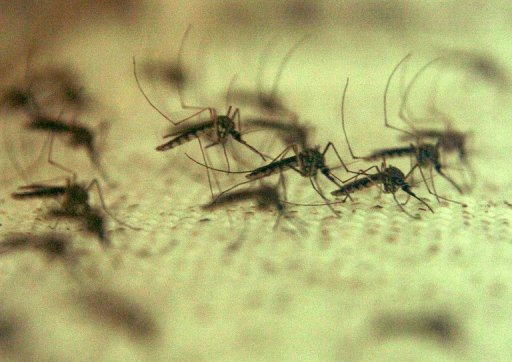 West Nile Virus Infects Five Near Athens