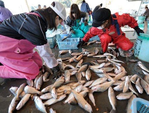 Fish Near Fukushima Still Contaminated: Study