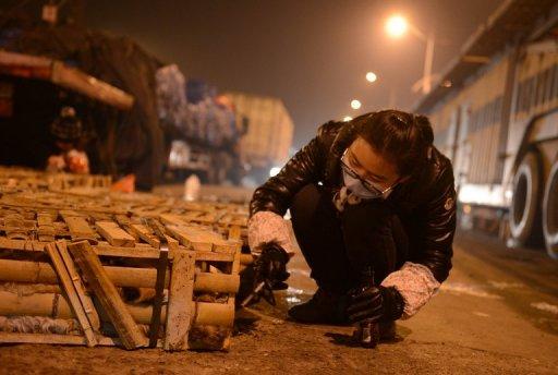 600 Cats Escape Culinary Fate After China Crash