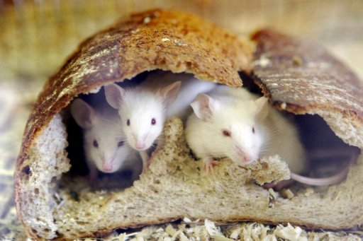 Russia Puts Mice, Newts in Space for a Month
