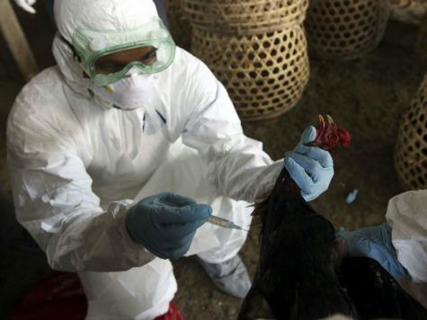World Health Organization: New Bird Flu Strain 'One of Most Lethal'