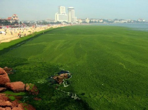 China Hit by Largest-Ever Algae Bloom