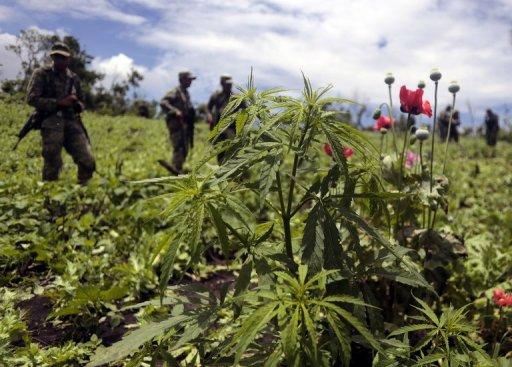 Mexico City Mulls Legal Marijuana 'Clubs'