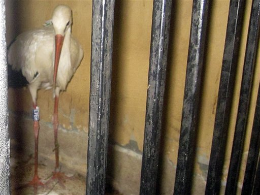 Stork Detained as Spy in Egypt Found Dead