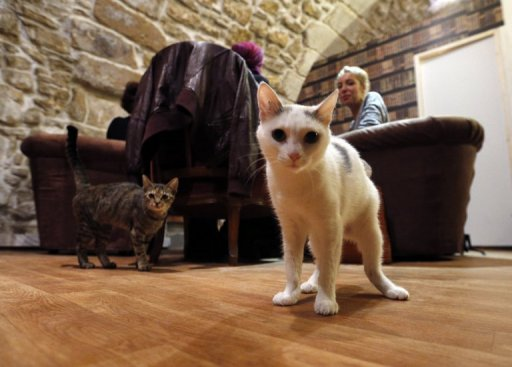 'Cat Cafe' Is Purrfect Spot for Paris Animal Lovers