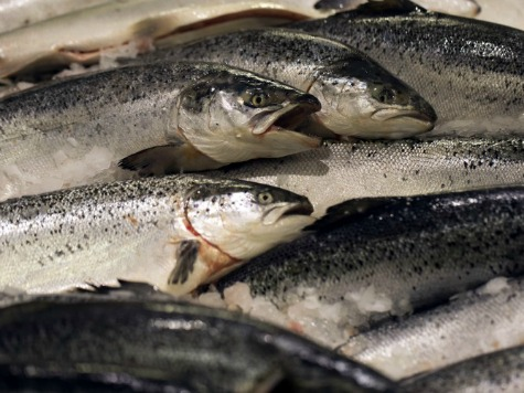 Climate Alarmist Warns: Fish Are the New Global Warming!