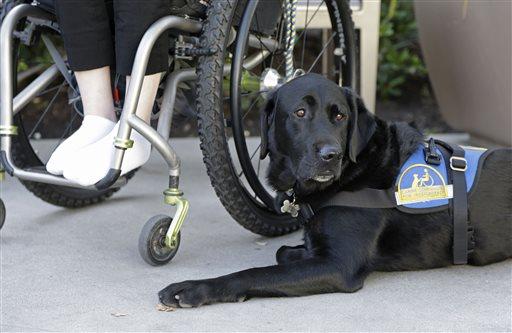 Impostor Service Animals Posing Growing Problem