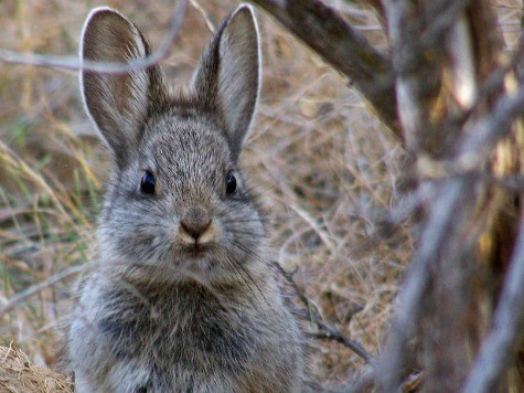 Britain to Cull Thousands of Rabbits on Tiny Scottish Island