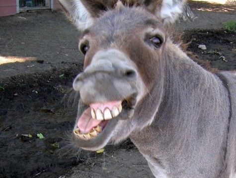 Wal-Mart China Recalls Fox-Tainted Donkey Meat Product from Stores