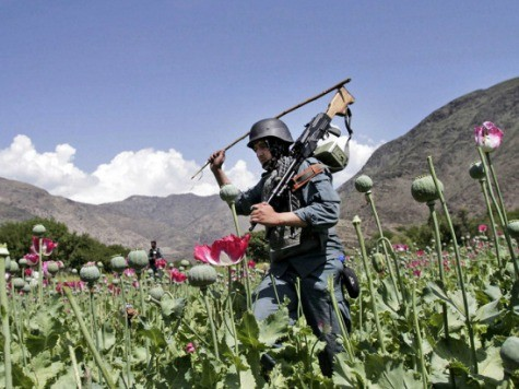 Afghanistan IG: Opium 'Crisis' a U.S. 'National Security Concern'