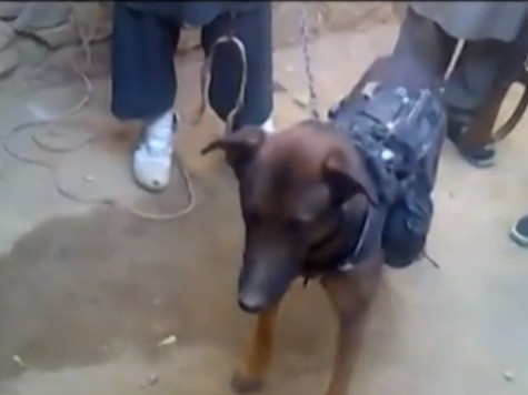VIDEO: Taliban Capture British Dog of War