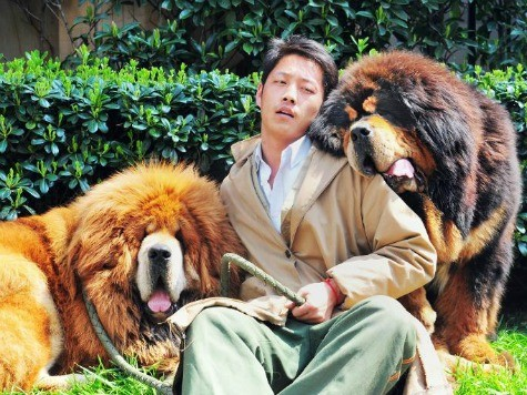 Dog 'Sold for $2 Million' in China
