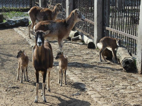Kharkiv Zoo's Animals Face Starvation Due to Lack of Funds