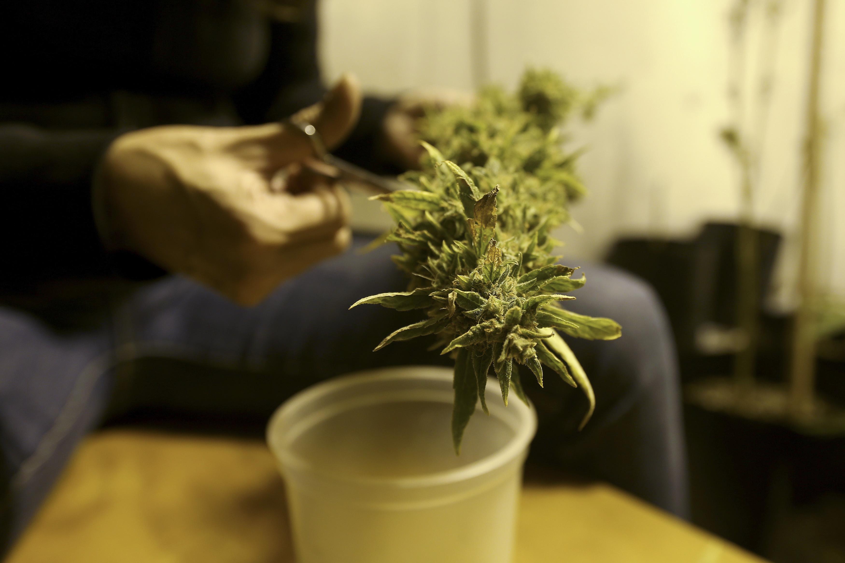 Uruguay to Sell Marijuana Tax-Free to Undercut Drug Traffickers