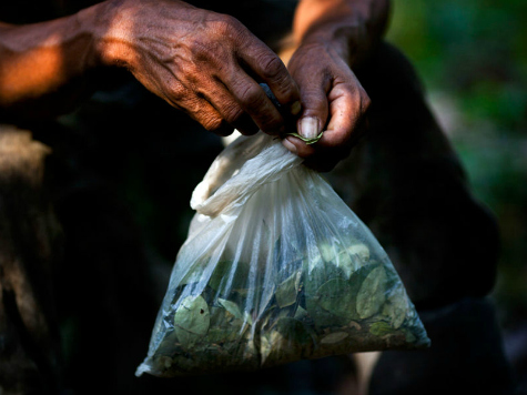 Bolivia to Give UN Chief Coca Leaf Birthday Cake