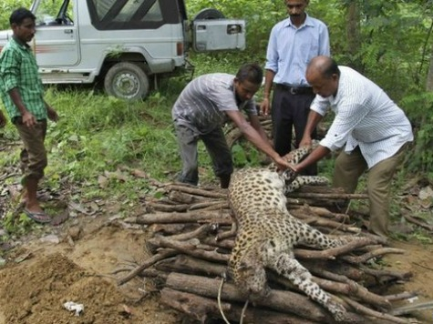 56-Year-Old Woman in India Slays Leopard