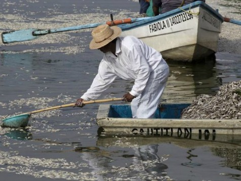 Thousands of Fish Die in Mexican Lake