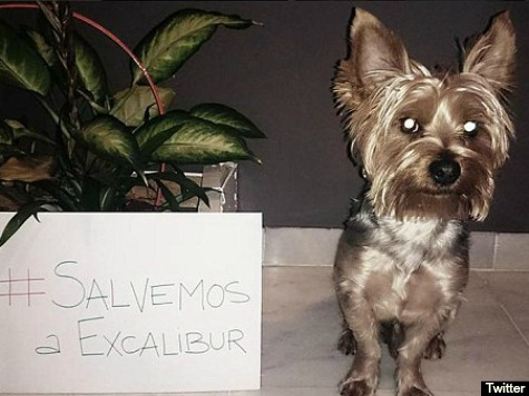Hashtag Campaign Forms to Save Ebola Victim's Dog as Protesters Clash with Police