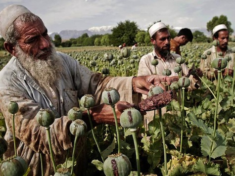 Afghanistan Counternarcotics: A Cut and Run Strategy is No Strategy At All