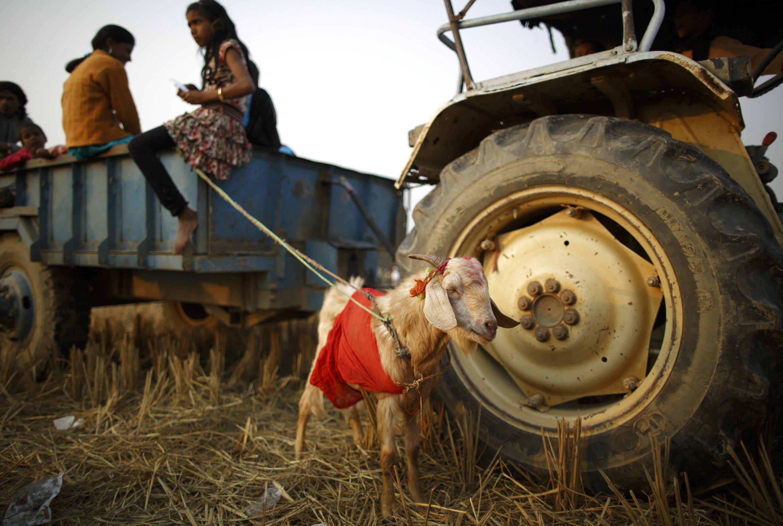 Nepal Devotees Sacrifice Thousands of Animals in Hindu Ritual