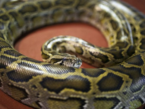 Woman Stabs Python to Save Pet Dog in Hong Kong