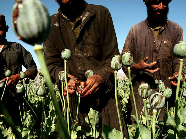 Experts: Booming Opium Trade May Turn Afghanistan into Criminal State