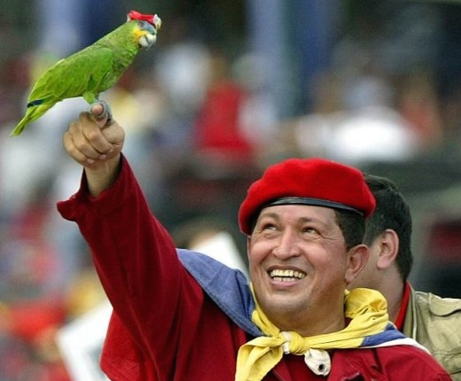 Missing Parrot Returns, Speaking Spanish