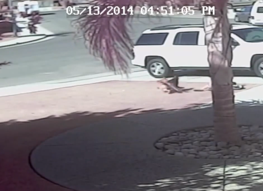Video: Cat Rescues Child from Vicious Dog Attack