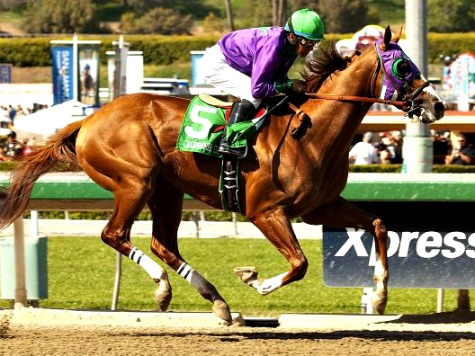California Chrome: from Humble Beginnings, Going for Triple Crown