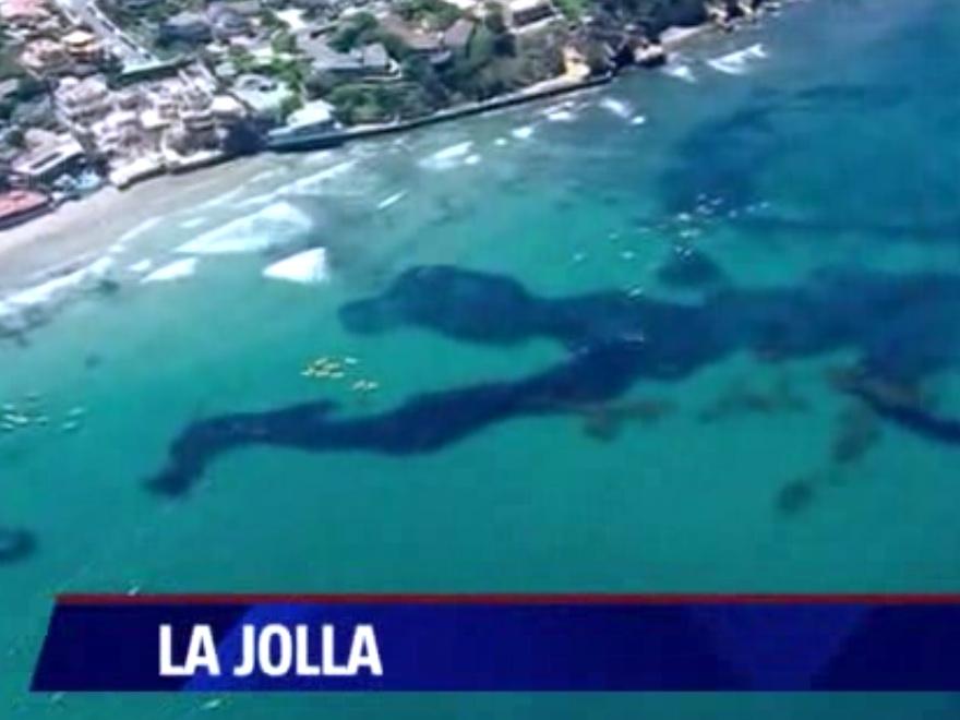 Massive School of Anchovies Near San Diego Shock Scientists