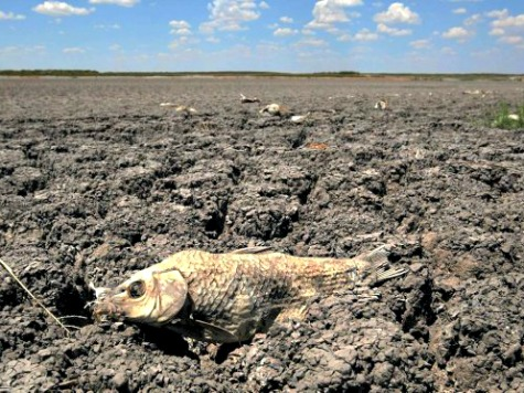 California Drought Precipitates Hottest Year on Record