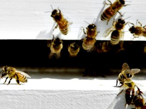 Drought is a Buzz Kill for California Honeybees