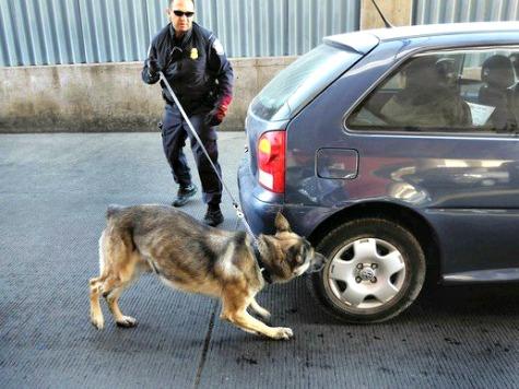 Drug Smuggler Sues over Mean Drug Dog