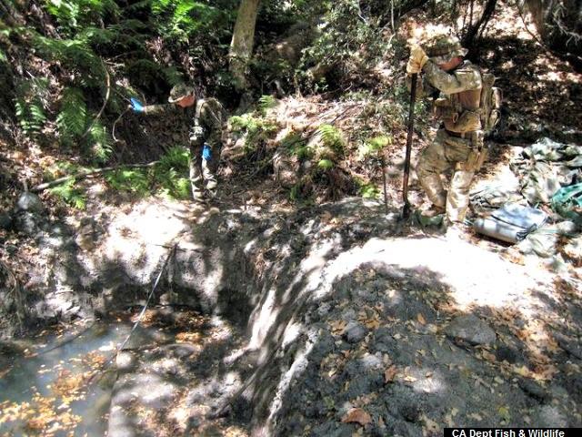 Authorities Raid Marijuana Grow Site Using Stolen Water from Indian Reservation