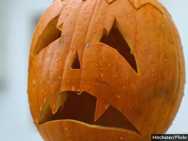 Drought: Giant Pumpkins Decline, Depress Passionate Growers