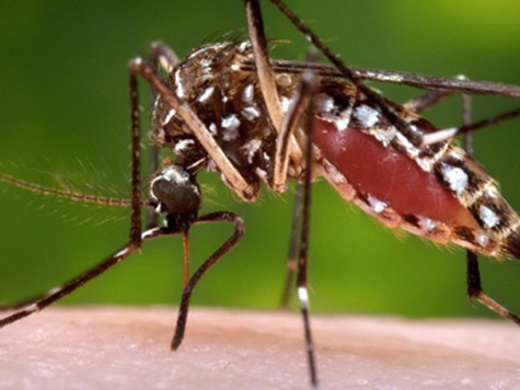 West Nile Kills Possible 2nd Victim in San Diego Outbreak