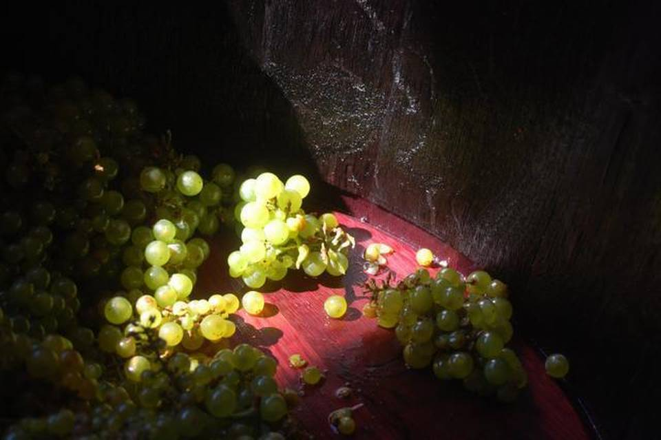 Wineries and Brewers Sanctioned for Twitter Campaign at Grape Escape