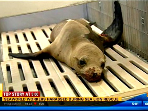 Sea World Animal Rescue Team Harassed While Saving Injured Sea Lion