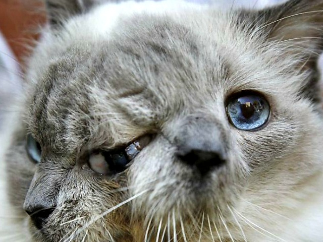 World's Oldest Janus-Faced Cat Dies