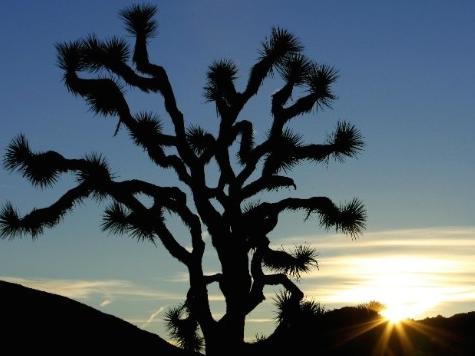 Prolific Scholar/Wikipedia Editor Dies After Joshua Tree Climbing Fall