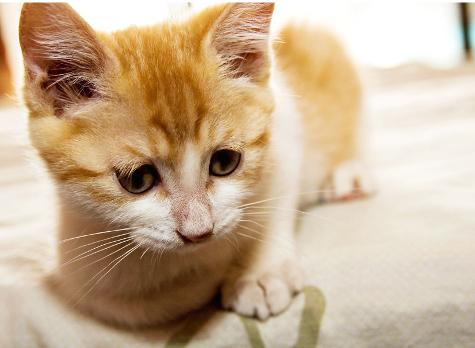 Vietnam's Taste for Cat Leaves Pets in Peril