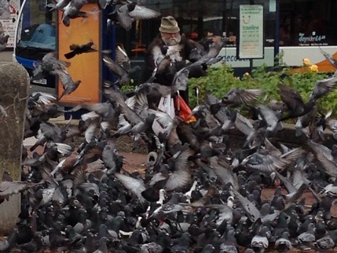 Pigeon Man Of Morecambe Jailed For Feeding Birds