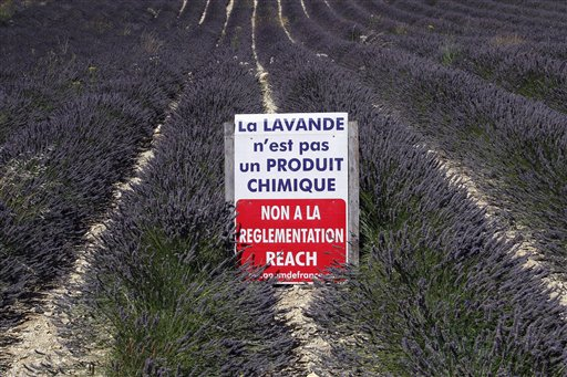 Now EU Forces Lavender Farmers to Place 'Fatal if Eaten' Warnings on Products