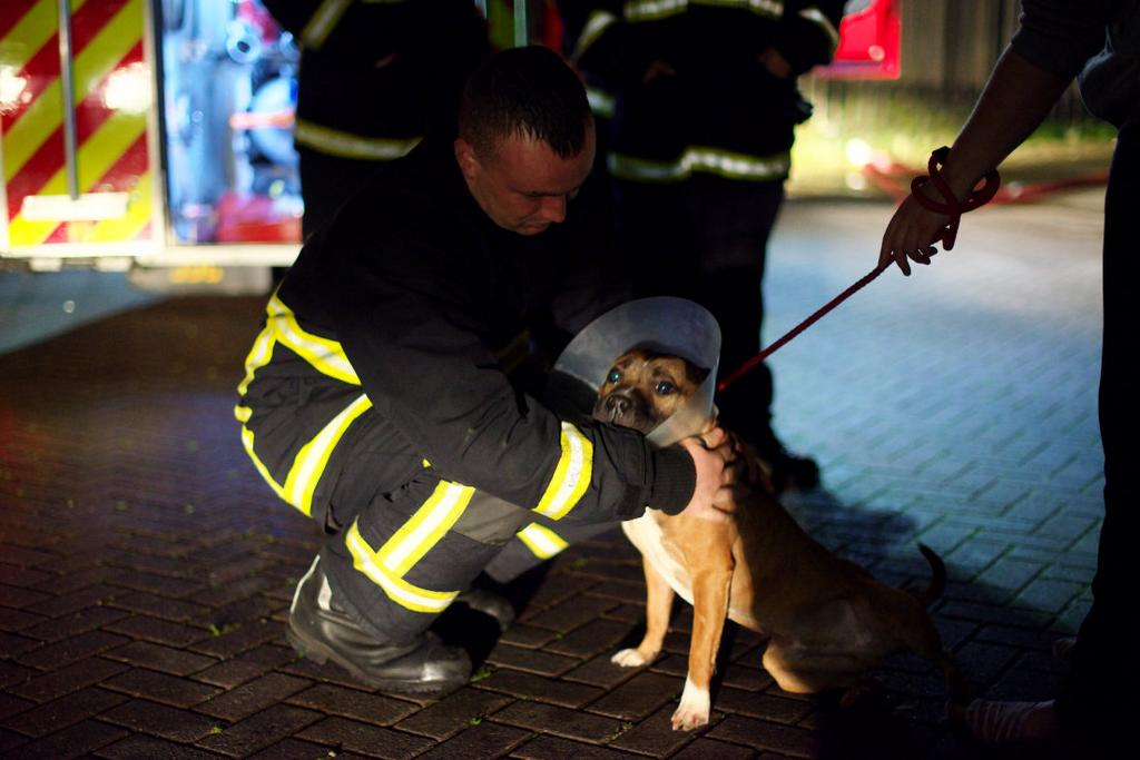 53 Dogs Killed in Fire at Shelter in Manchester