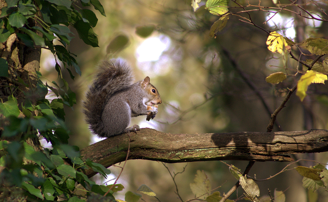 Vegetarians Furious as Squirrel Burgers Get on The Menu