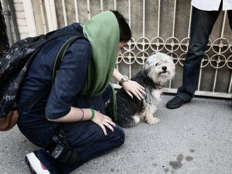 Iranian Dog Owners Face 74 Lashes for Walking their Pets under Draconian New Law