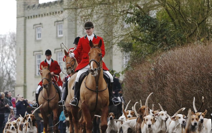 Fox Hunting Shouldn't Be Illegal, It Should Be Compulsory