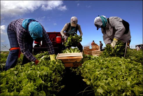 Brits 'Too Lazy to Pick Vegetables'